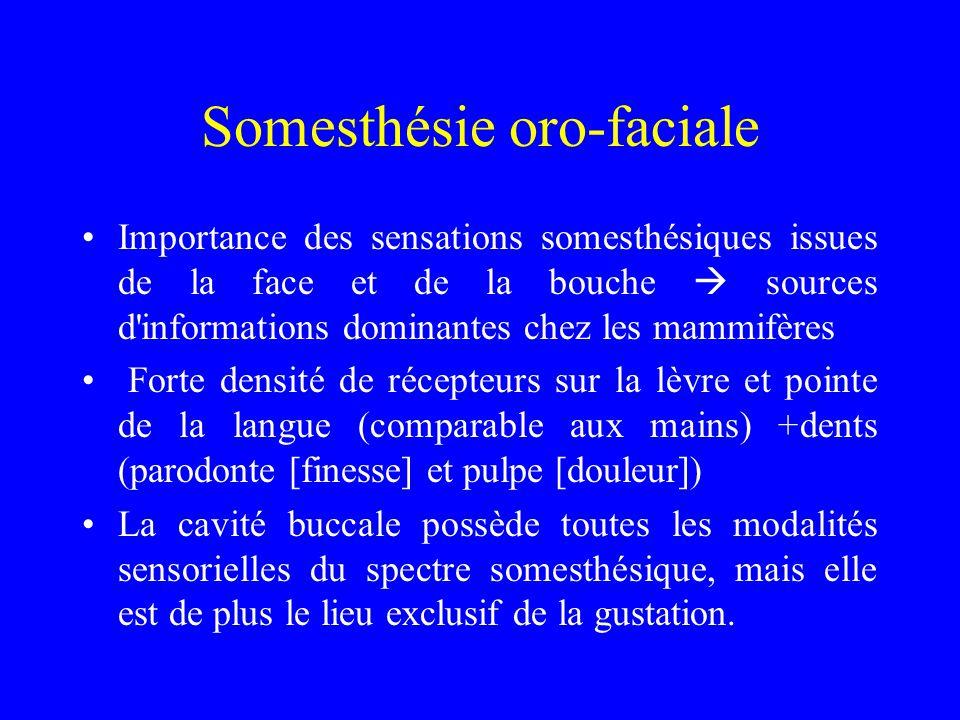 Somesthésie oro-faciale