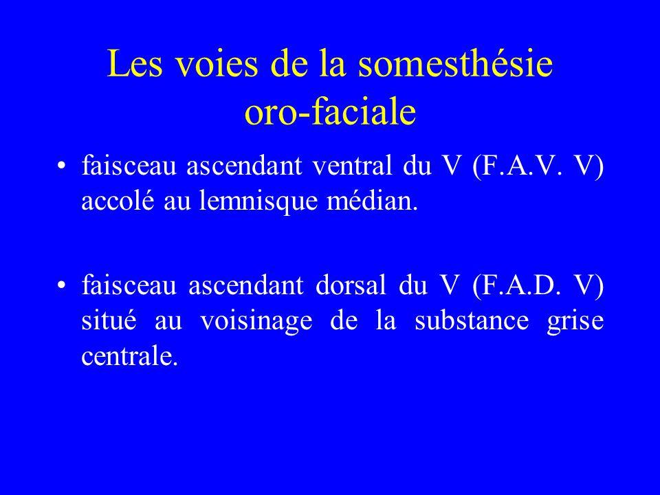 Les voies de la somesthésie oro-faciale