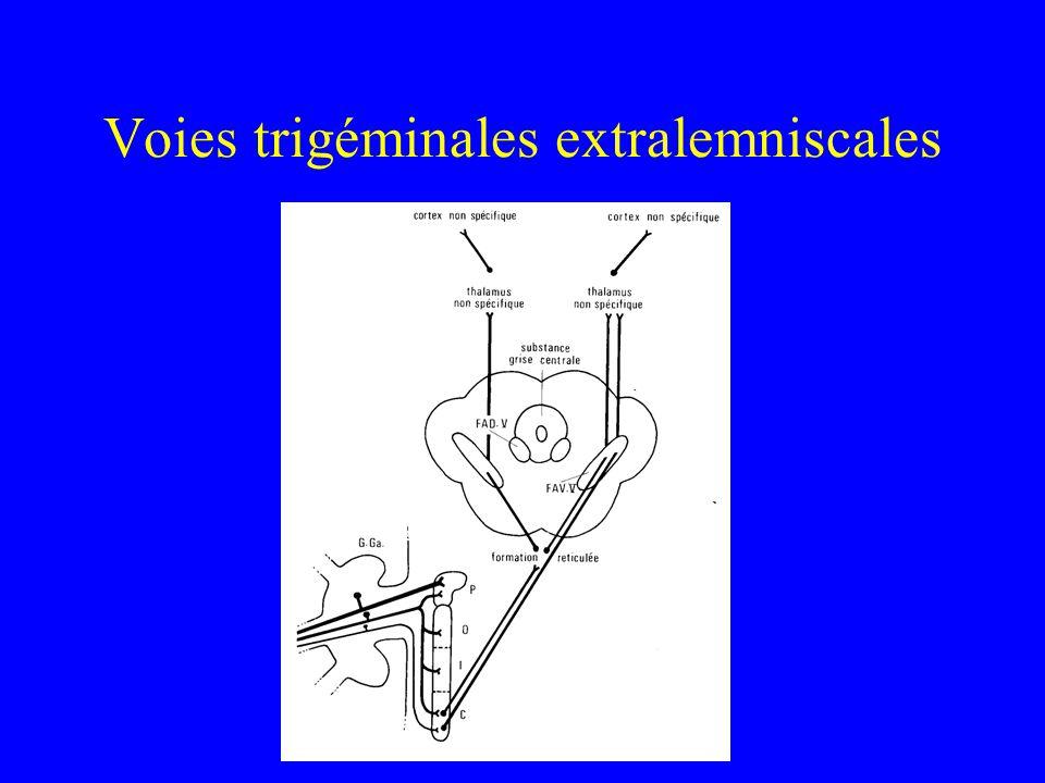 Voies trigéminales extralemniscales