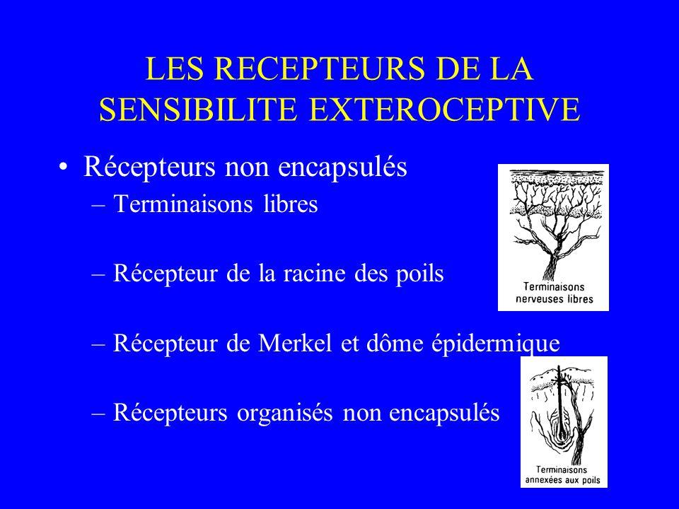 LES RECEPTEURS DE LA SENSIBILITE EXTEROCEPTIVE