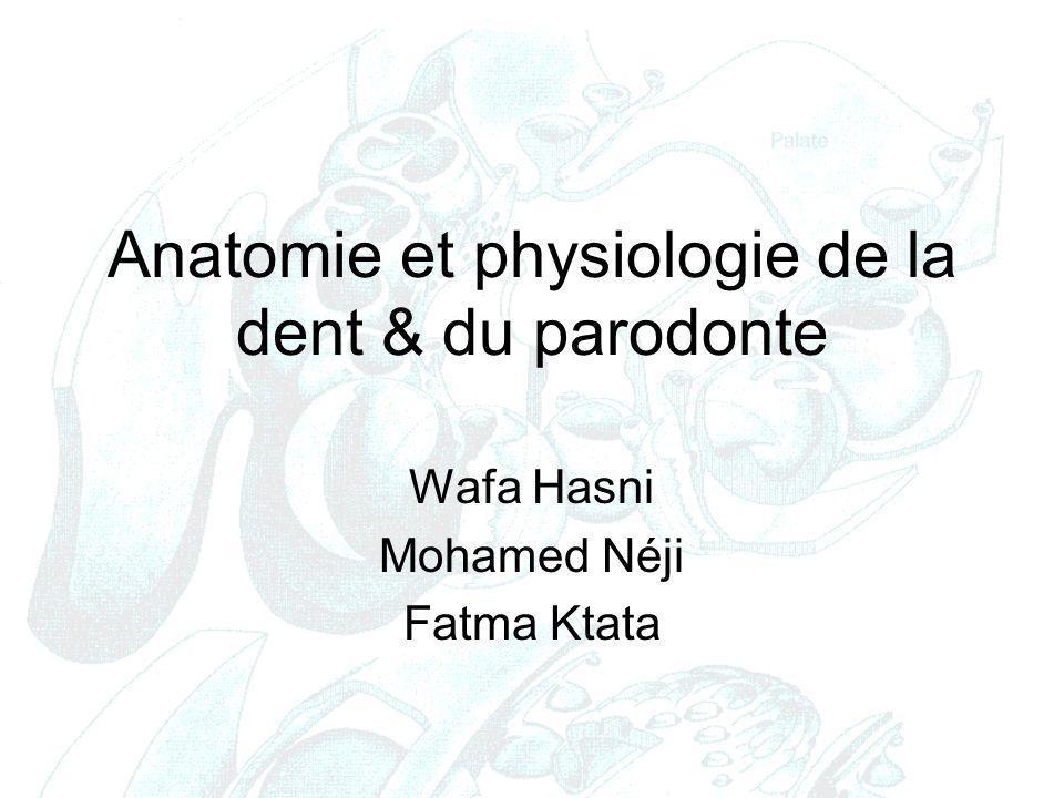 Anatomie et physiologie de la dent & du parodonte