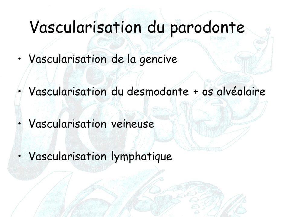 Vascularisation du parodonte