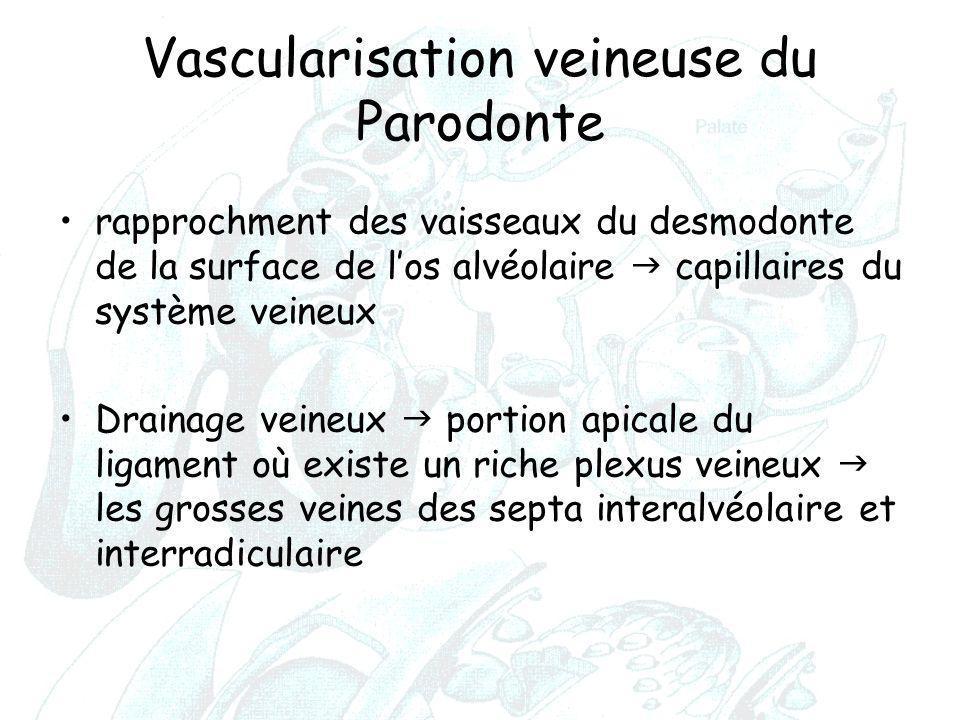 Vascularisation veineuse du Parodonte