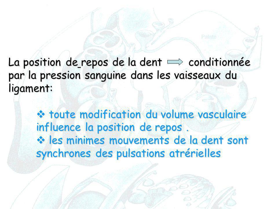 La position de repos de la dent conditionnée par la pression sanguine dans les vaisseaux du ligament: