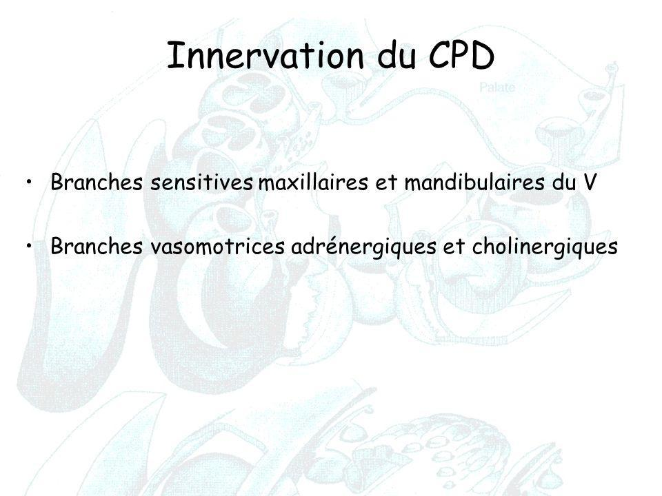Innervation du CPD Branches sensitives maxillaires et mandibulaires du V.