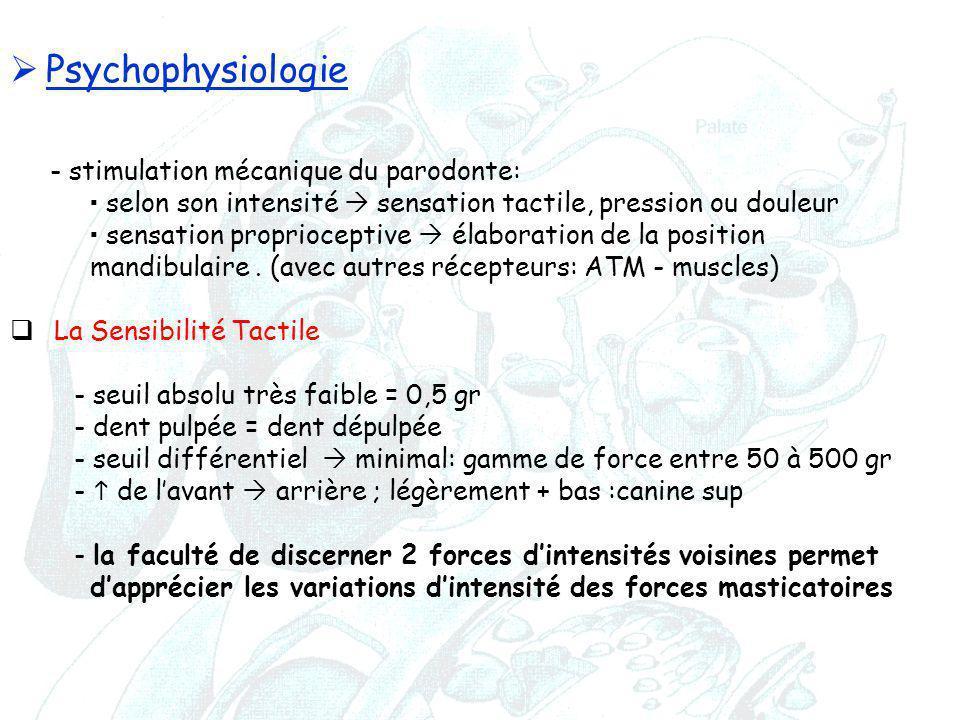 Psychophysiologie - stimulation mécanique du parodonte: