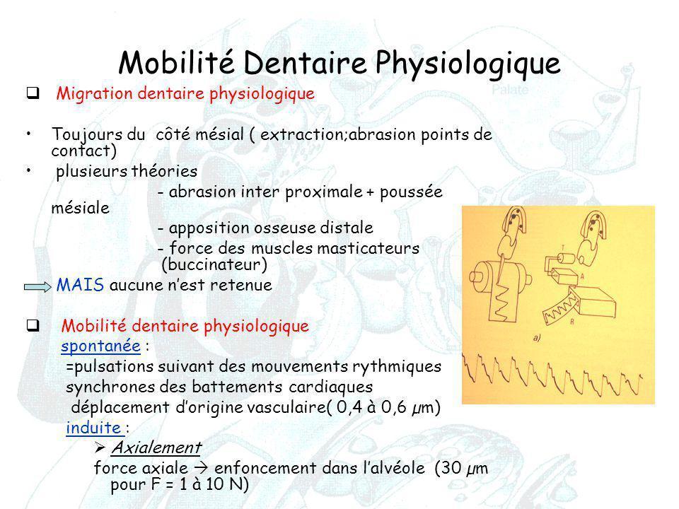 Mobilité Dentaire Physiologique