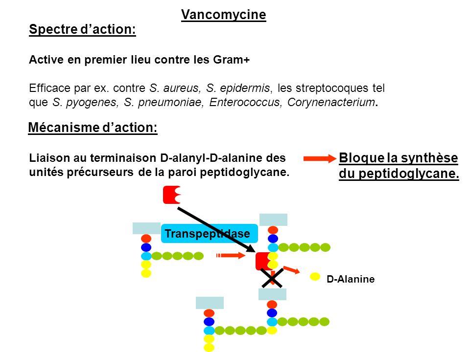 Vancomycine Spectre d'action: Mécanisme d'action: Bloque la synthèse