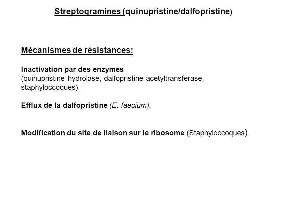 Streptogramines (quinupristine/dalfopristine)