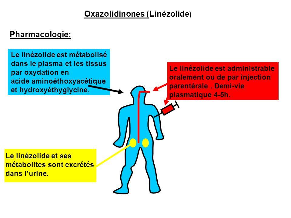 Oxazolidinones (Linézolide)