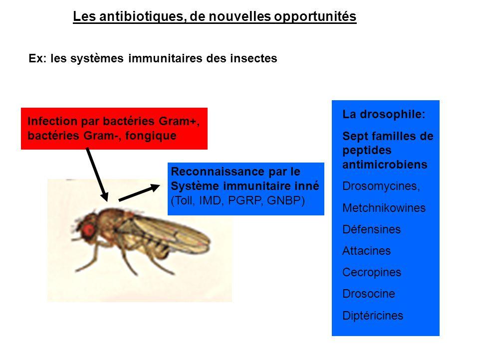 Les antibiotiques, de nouvelles opportunités
