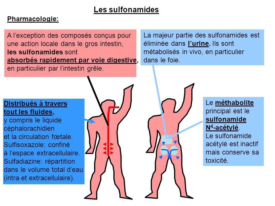 Les sulfonamides Pharmacologie: A l'exception des composés conçus pour