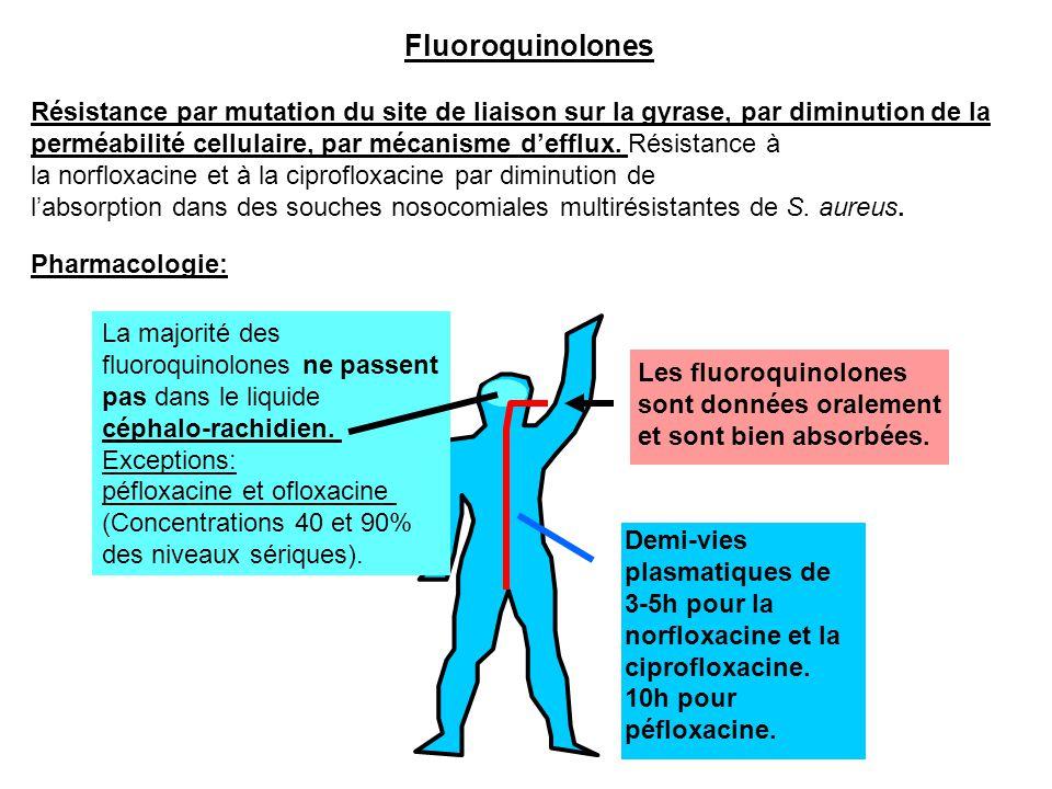 Fluoroquinolones Résistance par mutation du site de liaison sur la gyrase, par diminution de la.