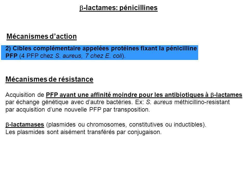 b-lactames: pénicillines