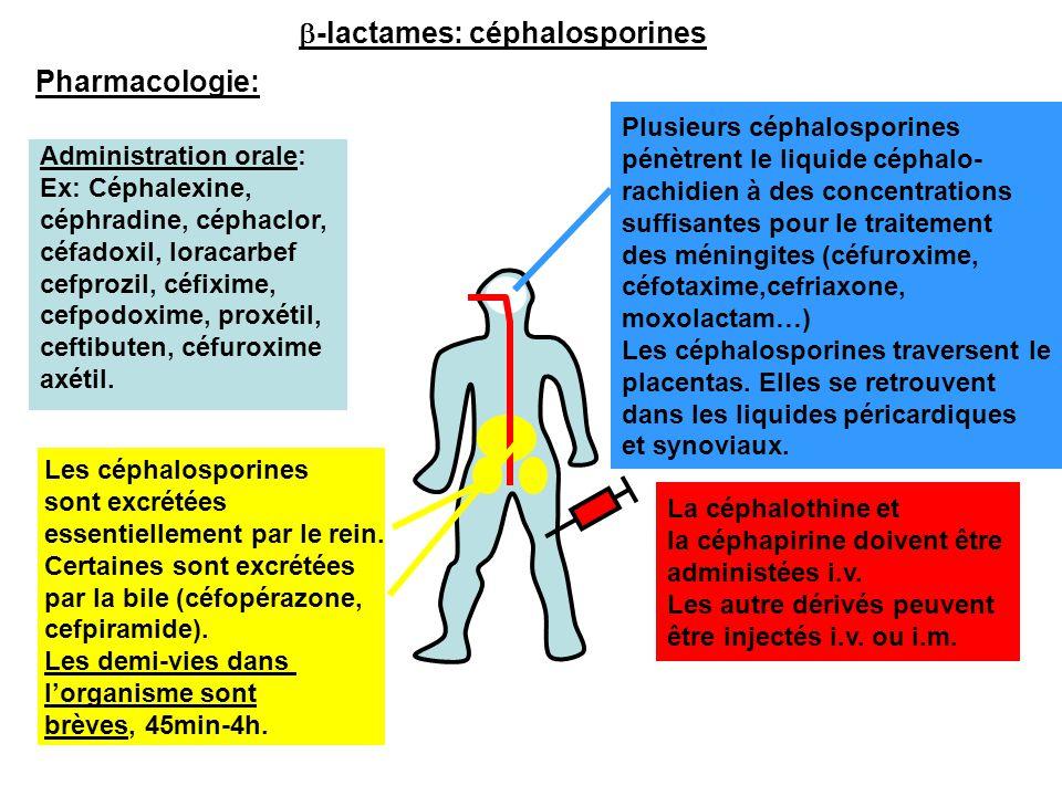 b-lactames: céphalosporines