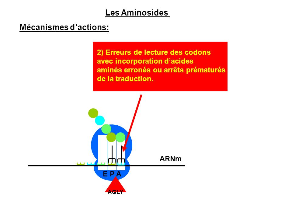 Mécanismes d'actions: