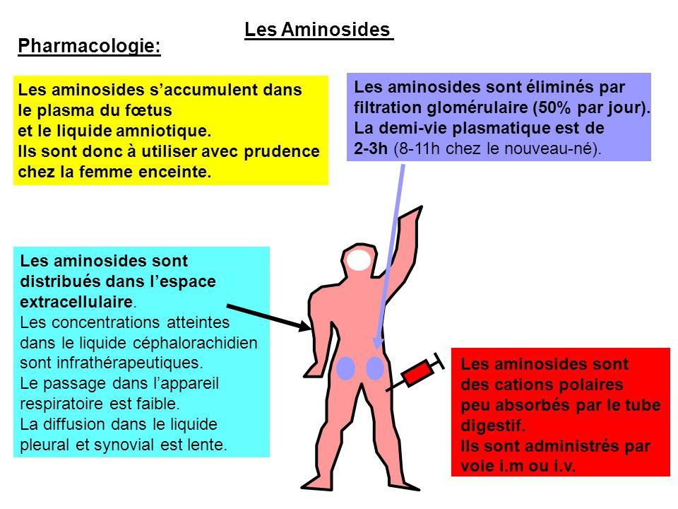 Les Aminosides Pharmacologie: Les aminosides s'accumulent dans