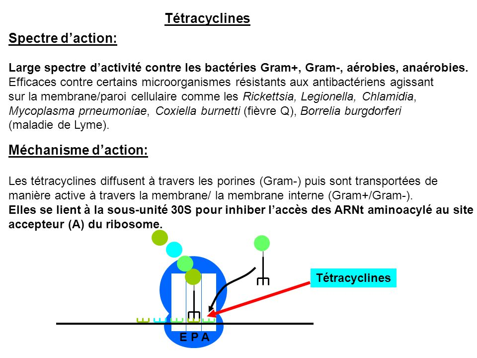 Tétracyclines Spectre d'action: Méchanisme d'action:
