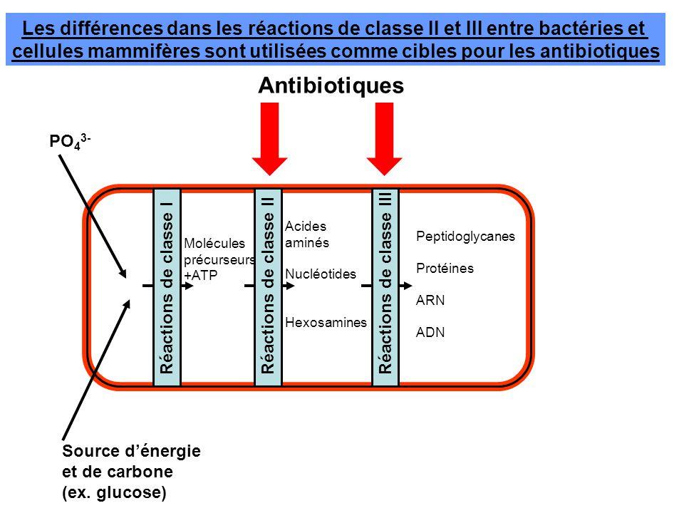 cellules mammifères sont utilisées comme cibles pour les antibiotiques