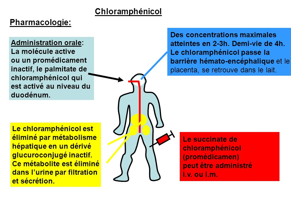 Chloramphénicol Pharmacologie: Des concentrations maximales