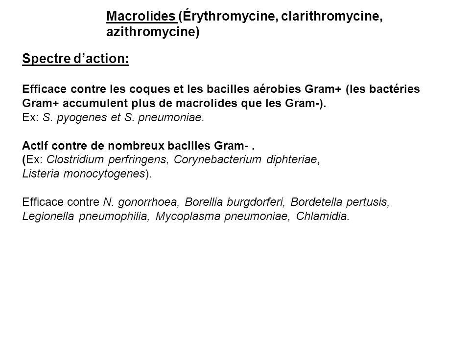 Macrolides (Érythromycine, clarithromycine, azithromycine)