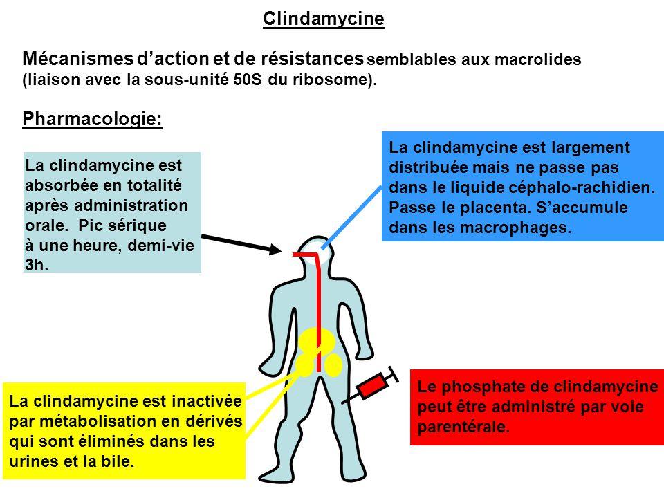 Mécanismes d'action et de résistances semblables aux macrolides