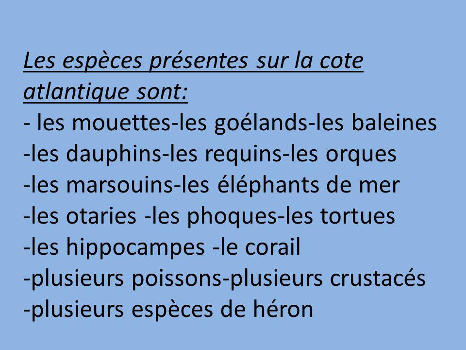 Les espèces présentes sur la cote atlantique sont: - les mouettes-les goélands-les baleines -les dauphins-les requins-les orques -les marsouins-les éléphants de mer -les otaries -les phoques-les tortues -les hippocampes -le corail -plusieurs poissons-plusieurs crustacés -plusieurs espèces de héron