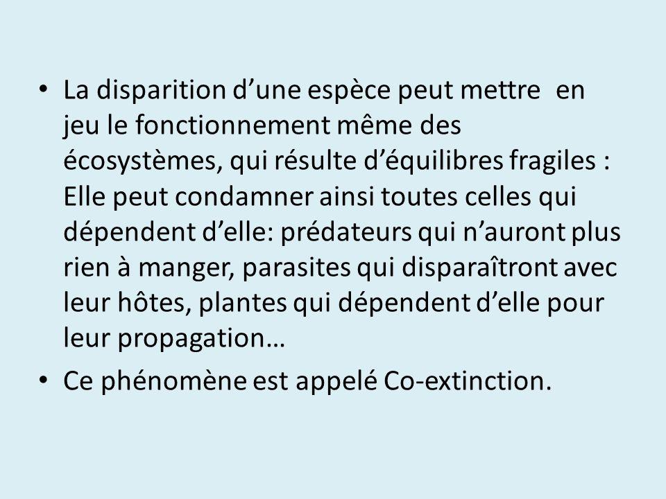 La disparition d'une espèce peut mettre en jeu le fonctionnement même des écosystèmes, qui résulte d'équilibres fragiles : Elle peut condamner ainsi toutes celles qui dépendent d'elle: prédateurs qui n'auront plus rien à manger, parasites qui disparaîtront avec leur hôtes, plantes qui dépendent d'elle pour leur propagation…