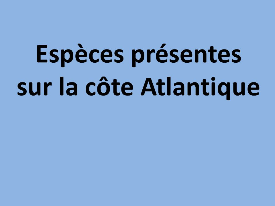 Espèces présentes sur la côte Atlantique