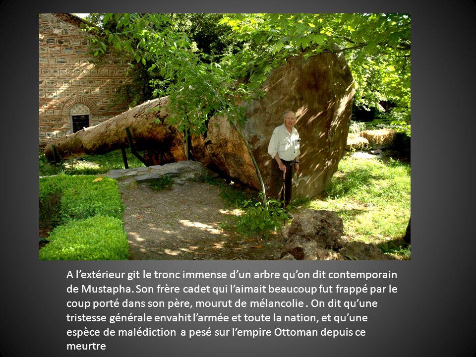 A l'extérieur git le tronc immense d'un arbre qu'on dit contemporain