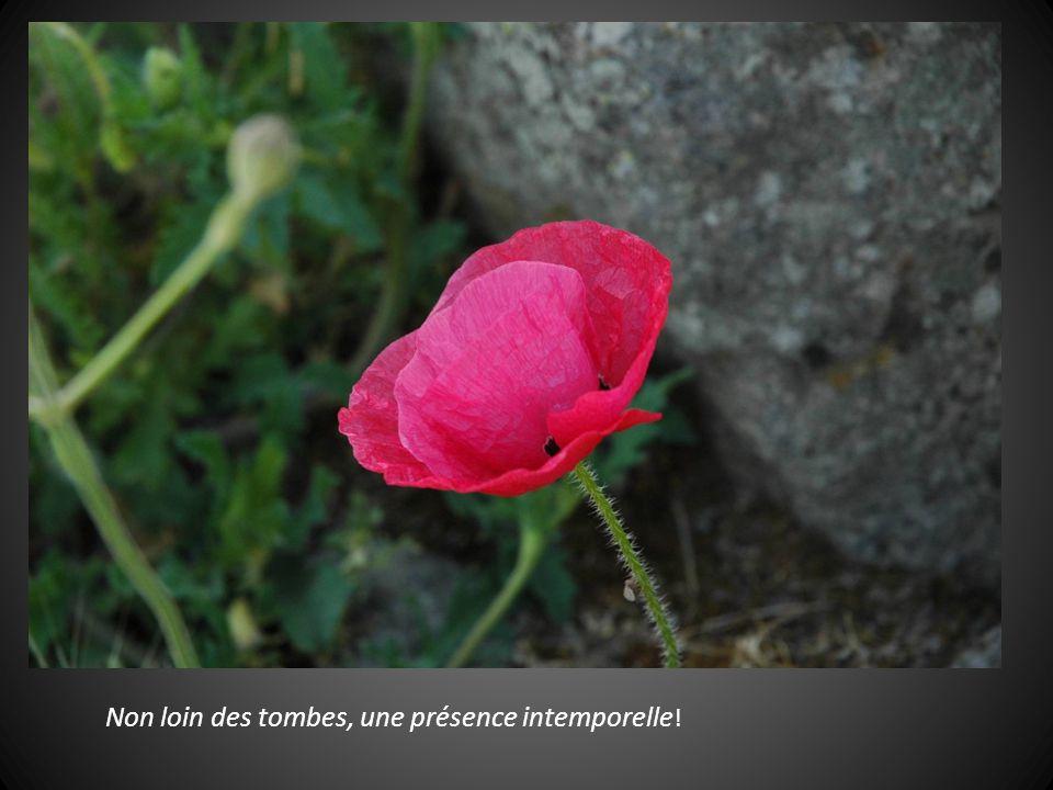 Non loin des tombes, une présence intemporelle!