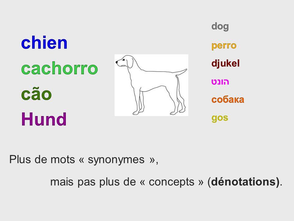 chien cachorro cão Hund Plus de mots « synonymes »,