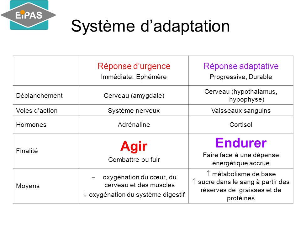 Système d'adaptation Endurer Agir Réponse d'urgence Réponse adaptative