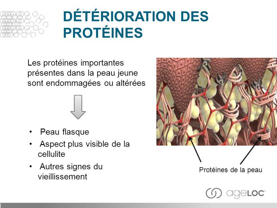 DÉTÉRIORATION DES PROTÉINES