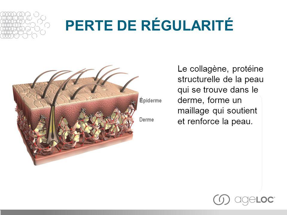 PERTE DE RÉGULARITÉ Le collagène, protéine structurelle de la peau qui se trouve dans le derme, forme un maillage qui soutient et renforce la peau.