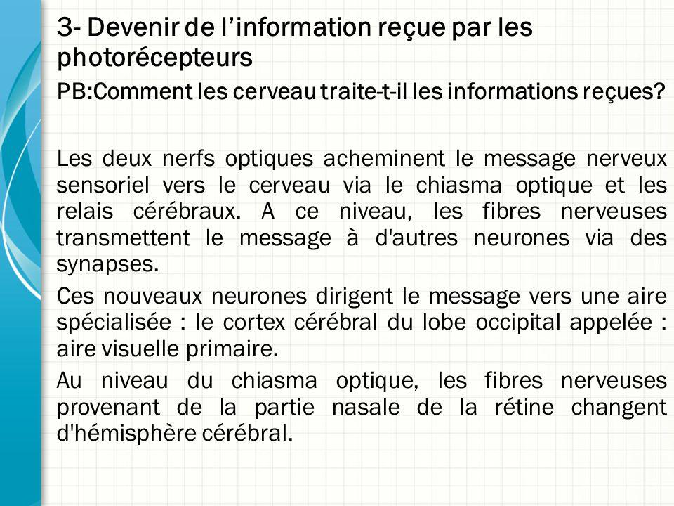 3- Devenir de l'information reçue par les photorécepteurs