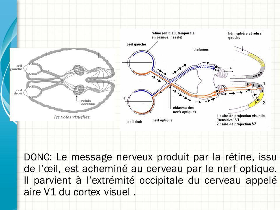DONC: Le message nerveux produit par la rétine, issu de l'œil, est acheminé au cerveau par le nerf optique. Il parvient à l'extrémité occipitale du cerveau appelé aire V1 du cortex visuel .