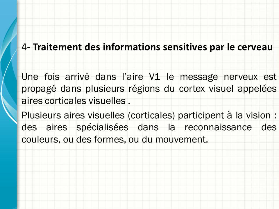 4- Traitement des informations sensitives par le cerveau