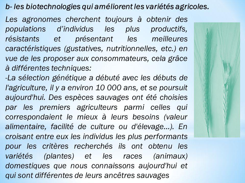 b- les biotechnologies qui améliorent les variétés agricoles.