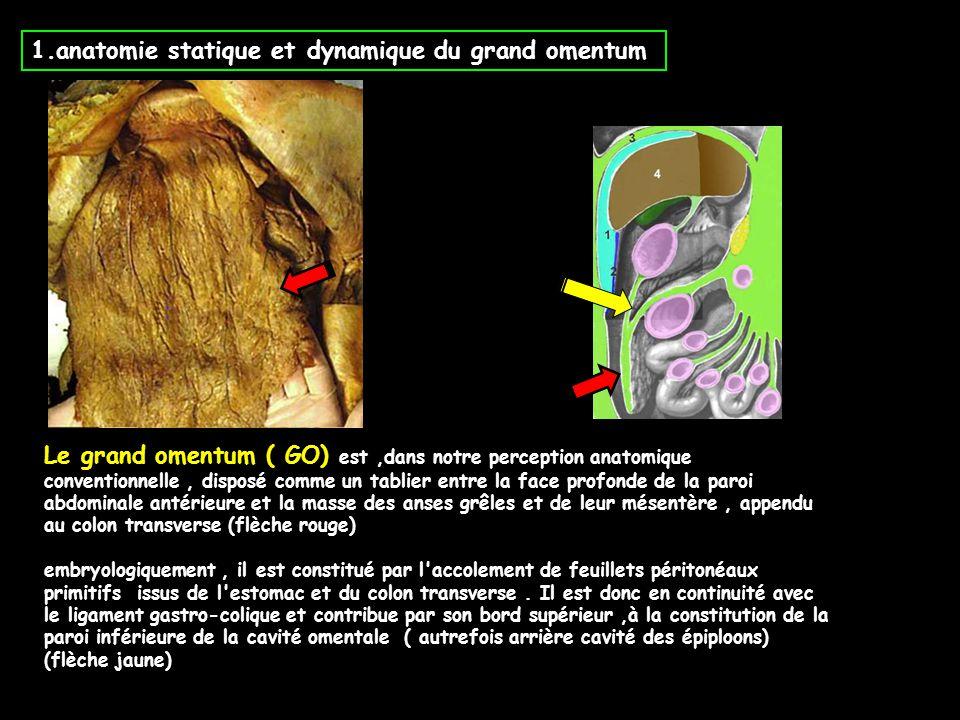 1.anatomie statique et dynamique du grand omentum