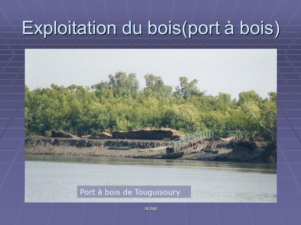 Exploitation du bois(port à bois)
