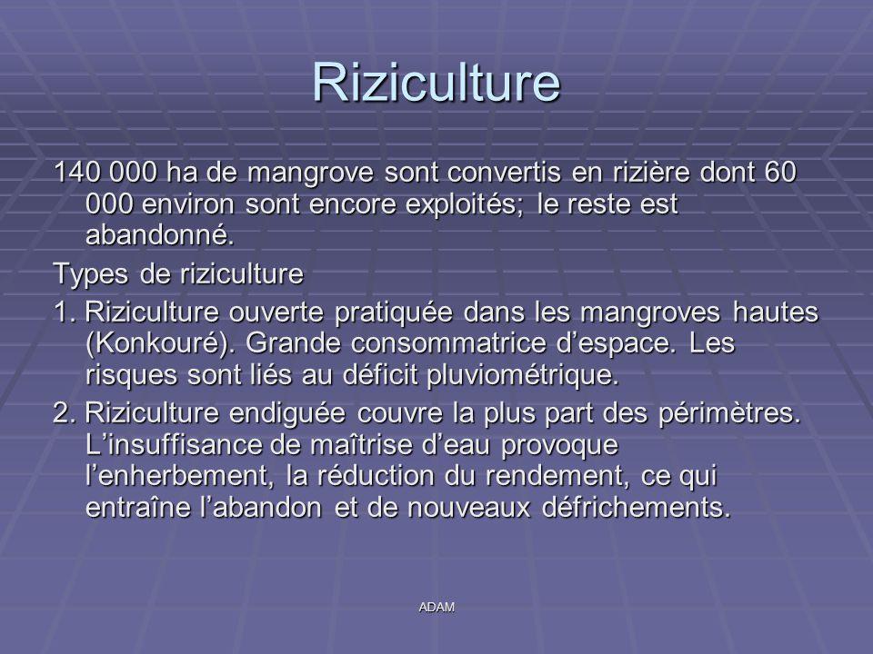 Riziculture 140 000 ha de mangrove sont convertis en rizière dont 60 000 environ sont encore exploités; le reste est abandonné.