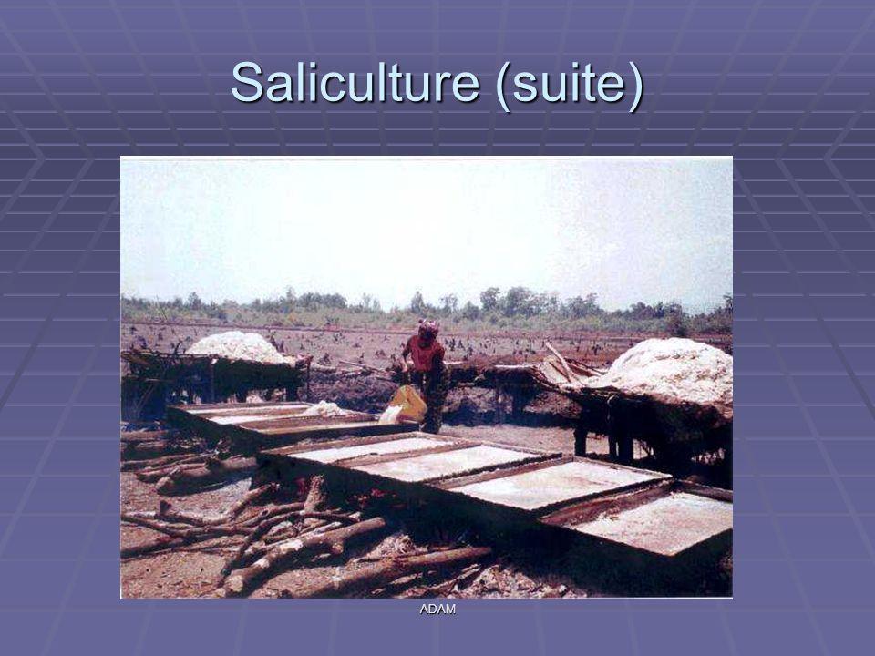 Saliculture (suite) ADAM