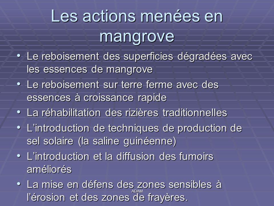 Les actions menées en mangrove