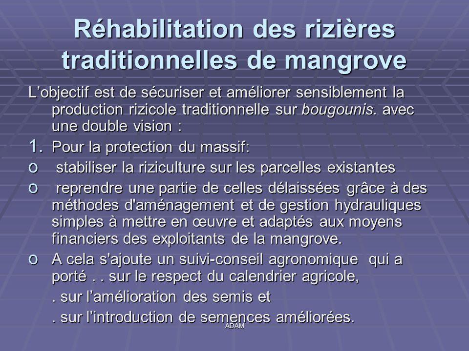 Réhabilitation des rizières traditionnelles de mangrove