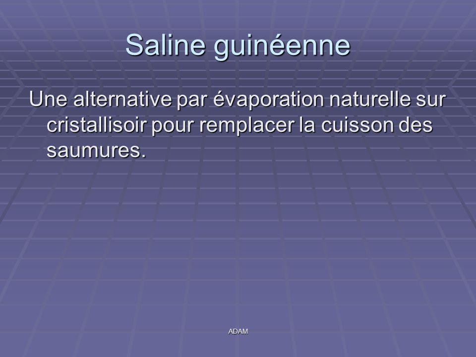 Saline guinéenne Une alternative par évaporation naturelle sur cristallisoir pour remplacer la cuisson des saumures.