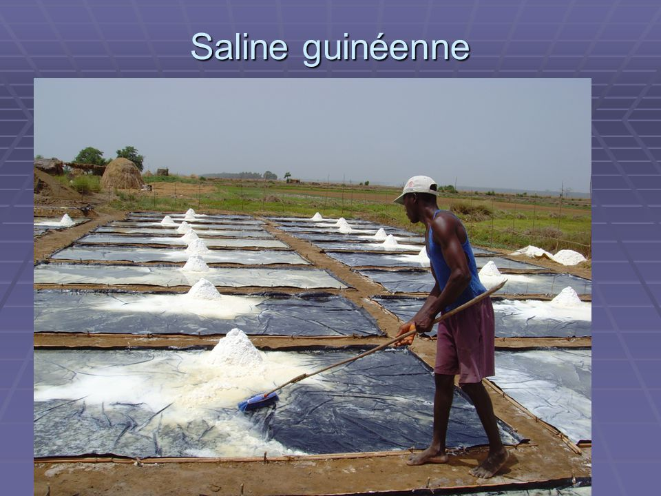 Saline guinéenne ADAM