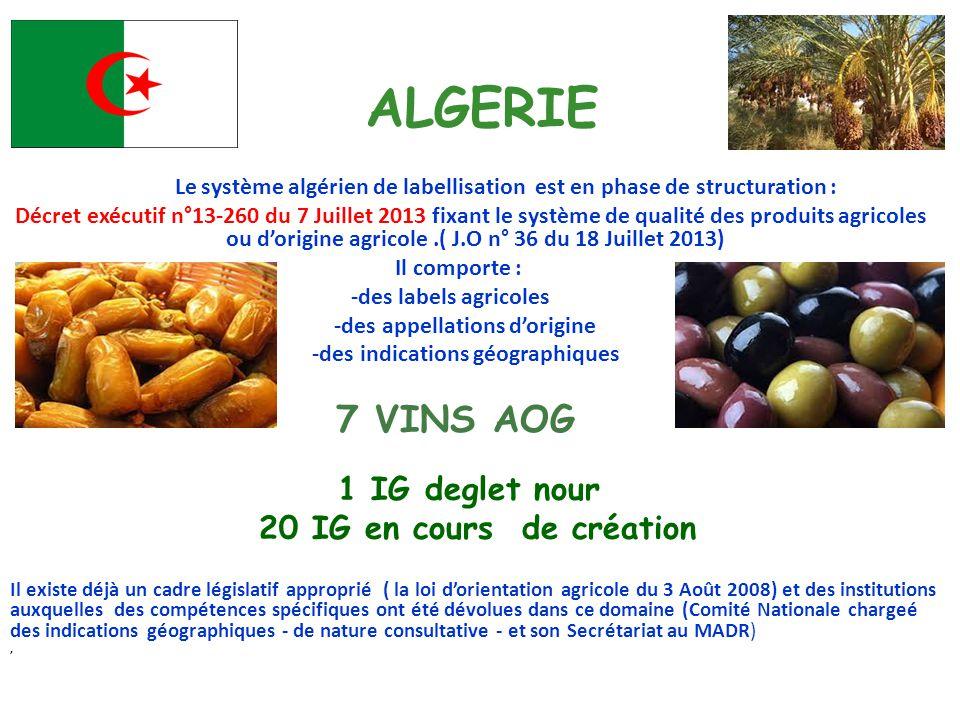 ALGERIE 20 IG en cours de création