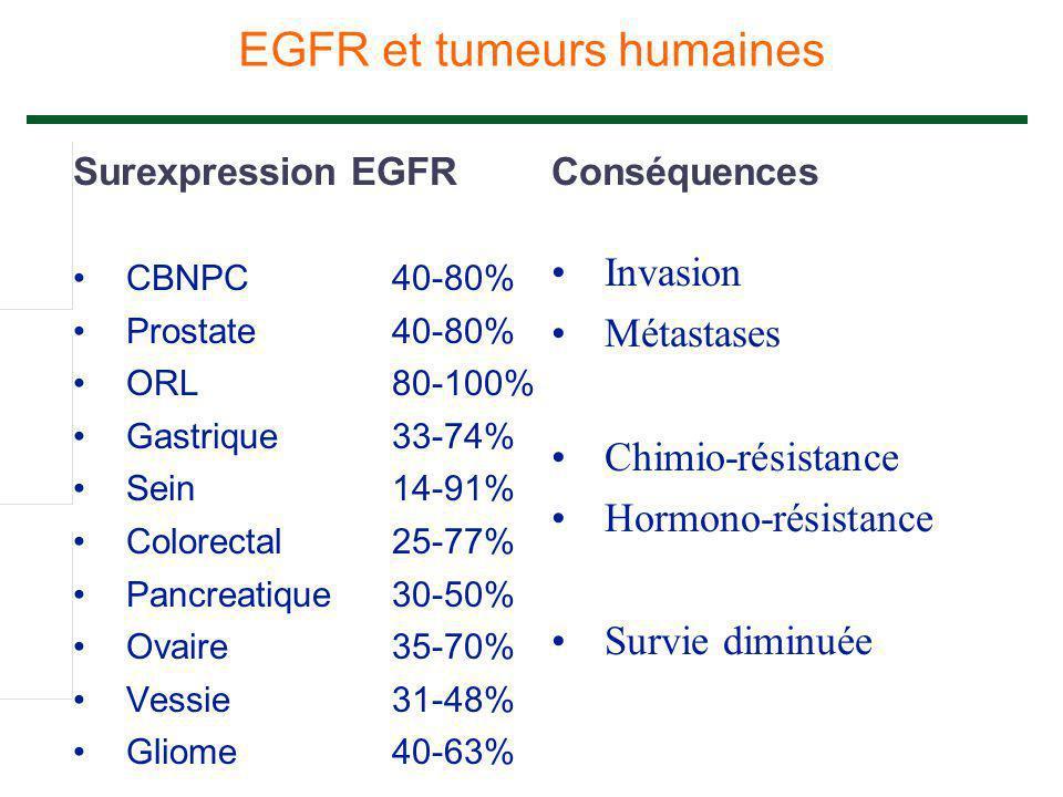 EGFR et tumeurs humaines
