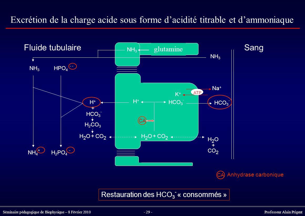Restauration des HCO3- « consommés »
